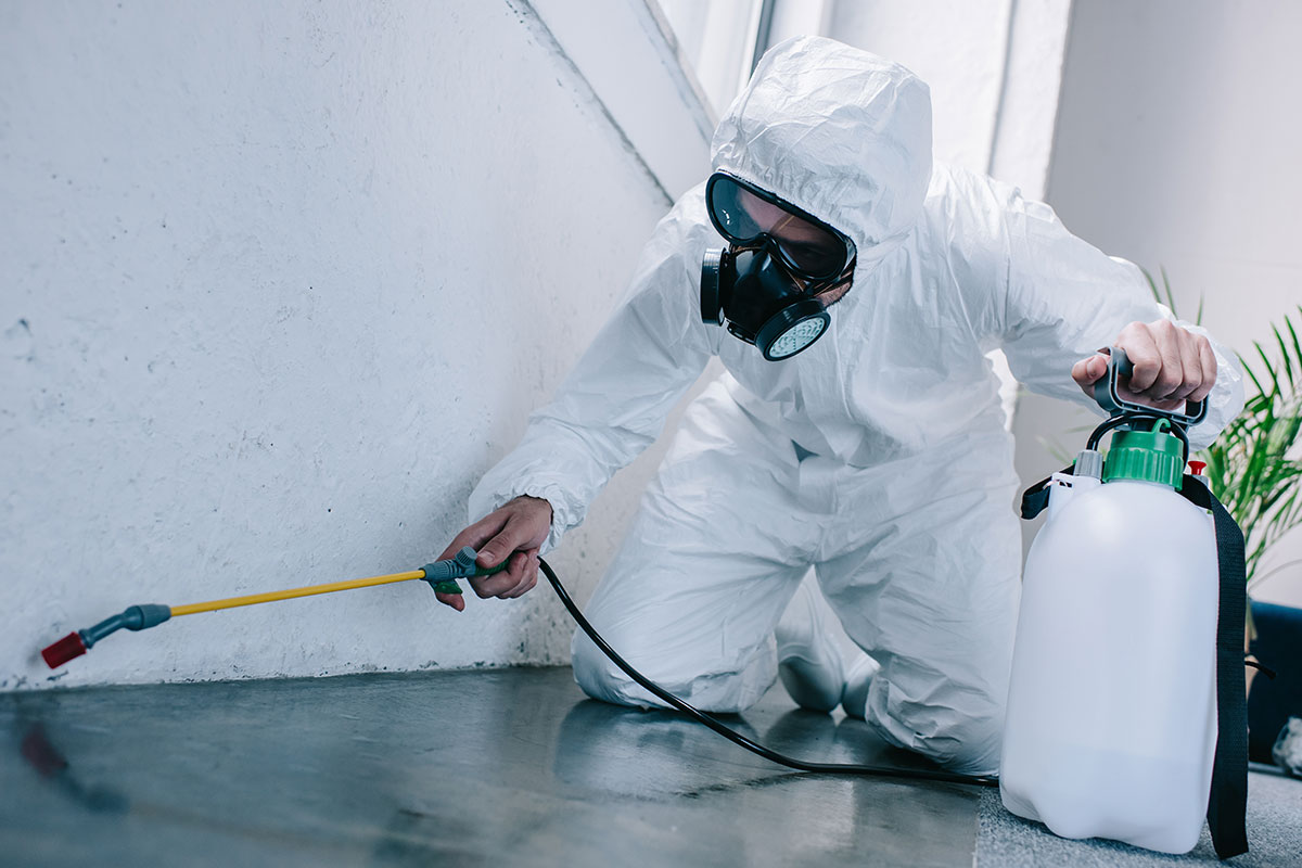 What are the needs and important to undergo the treatment of pest control service?